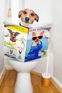 Non Prescription Dog Food For Urinary Health