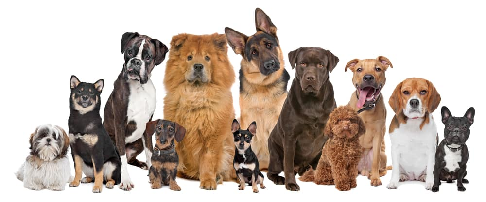 Lifestages: Dog Nutrition for Puppies, Adult and Senior Dogs 4