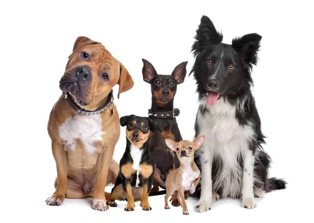 10 Best (Healthiest) Dog Foods to Prevent Taurine Deficiency 29
