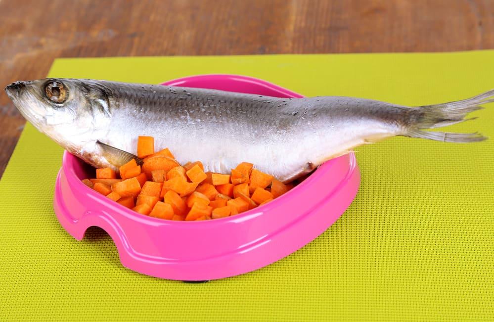 dog food and water bowl mats