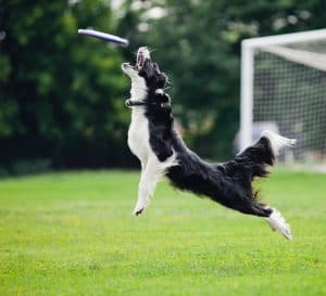 10 Best (Healthiest) Dog Foods for Active Dogs in 2020 27
