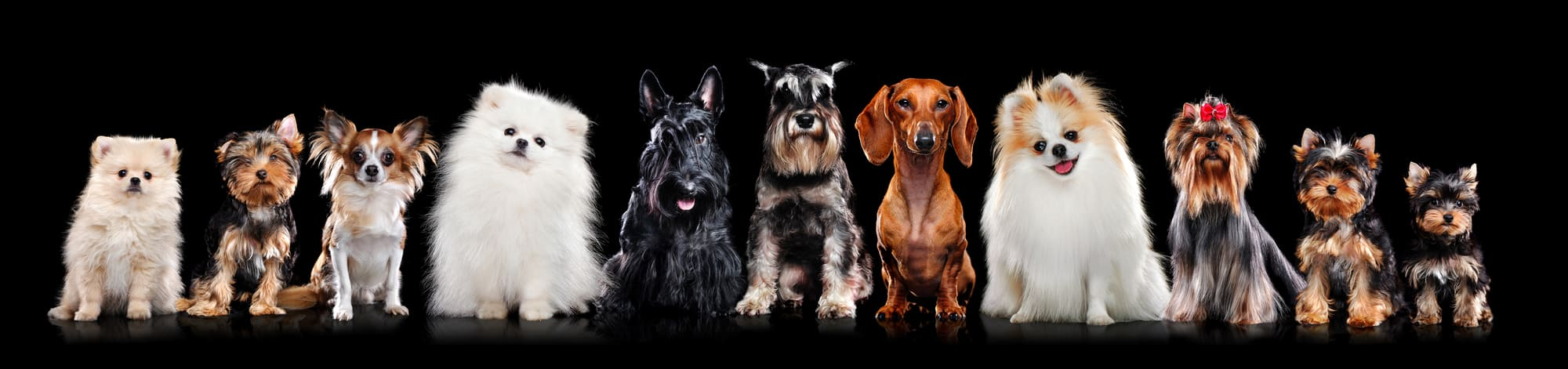 Dog Foods For Healthy Coat