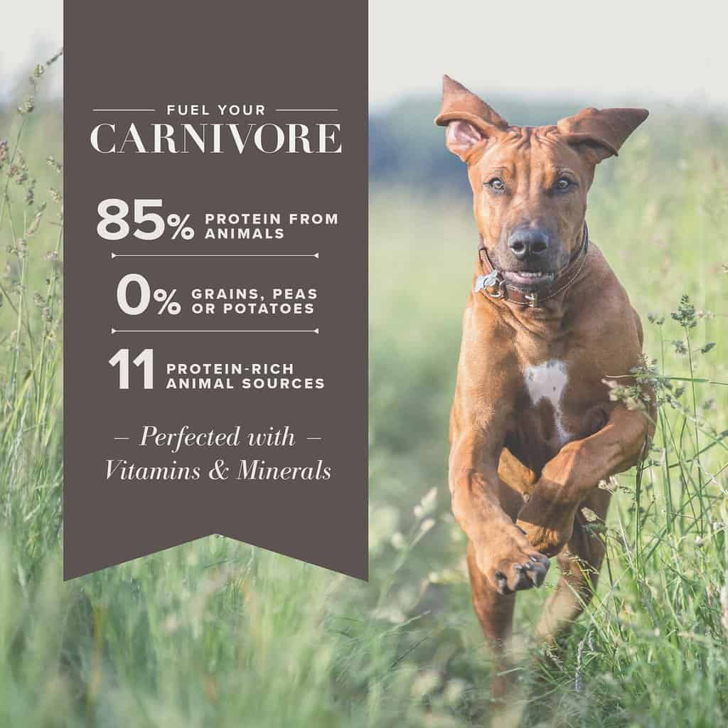 Blue Buffalo Carnivora Review 2021: The Pea & Potato Free Dog Food Line 23