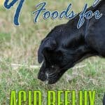 9 Best Dog Foods for Acid Reflux in [year]