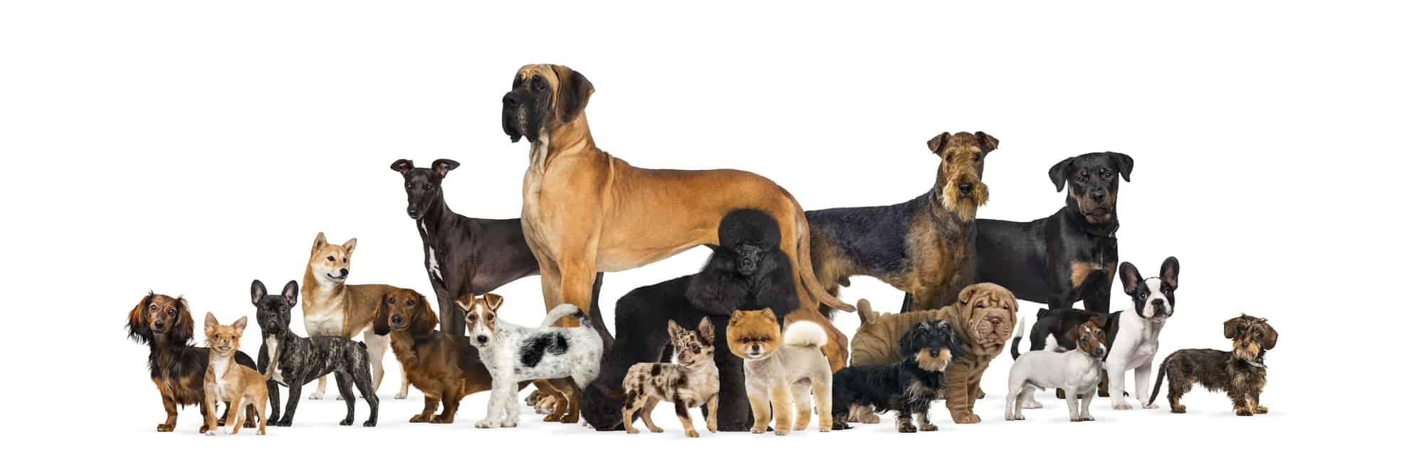 Best Dog Foods for Bladder Stones