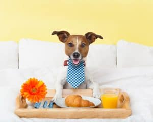Best Dog Foods For PH Balance