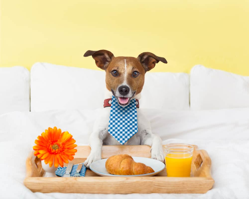 Best Dog Foods For PH Balance