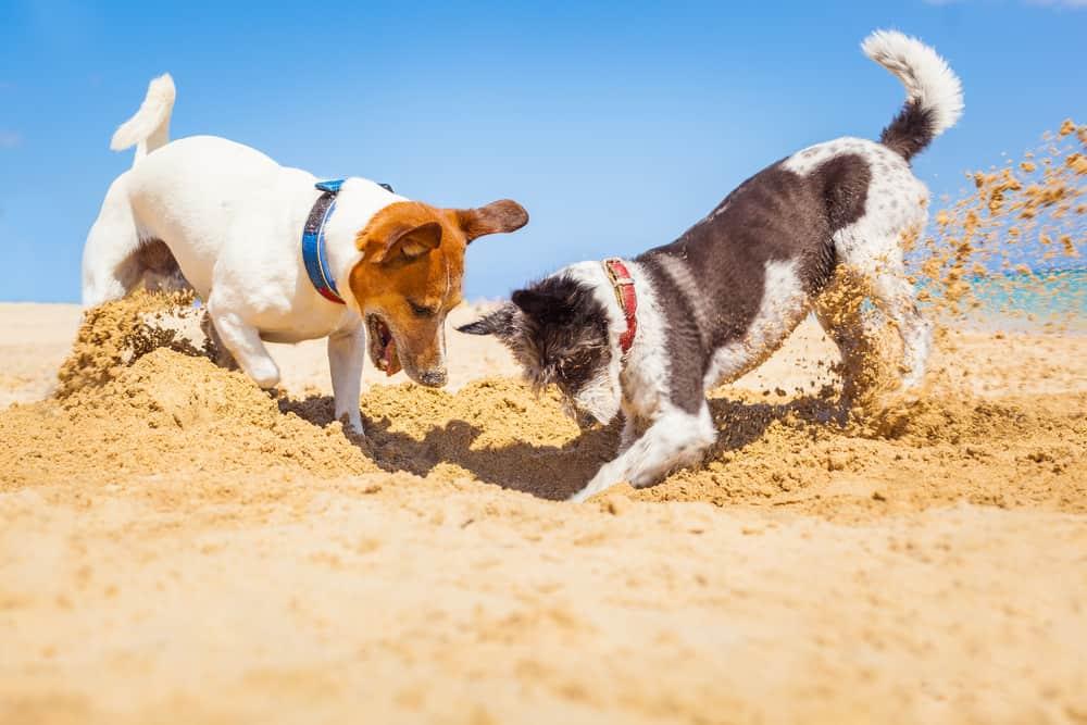 best dog food for brain health