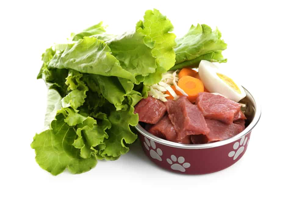 10 Ingredients to Avoid in Dog's Food: Make Sure Your Pal Is Eating Right! 3