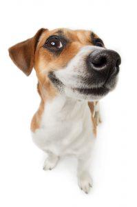 Dog Foods For Acid Reflux