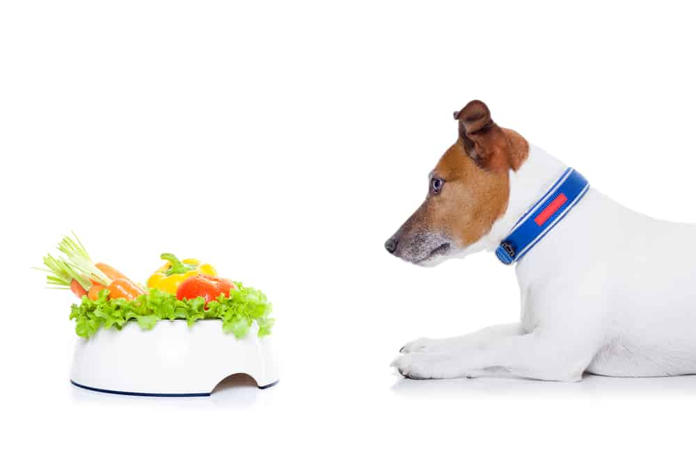 7 Best Dog Foods For Diabetic Dogs 24