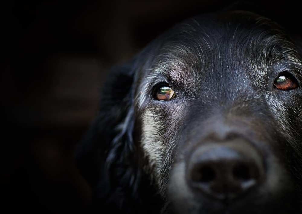 10 Best Dog Foods for Brain Health in 2021 30