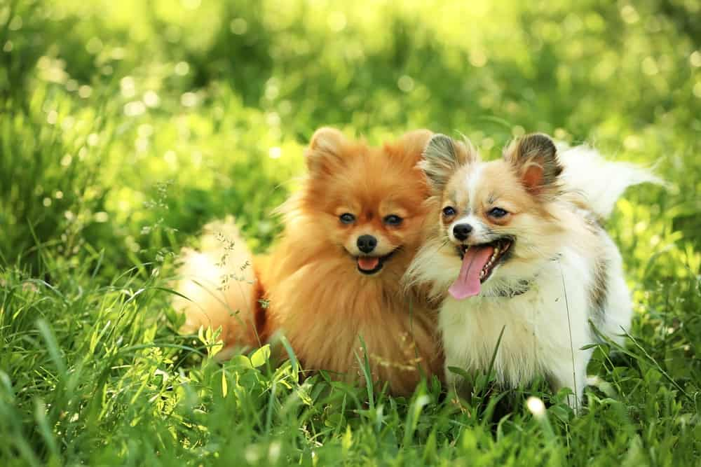Top 10 Best Dog Food for Hair Loss in Dogs in [year] 28