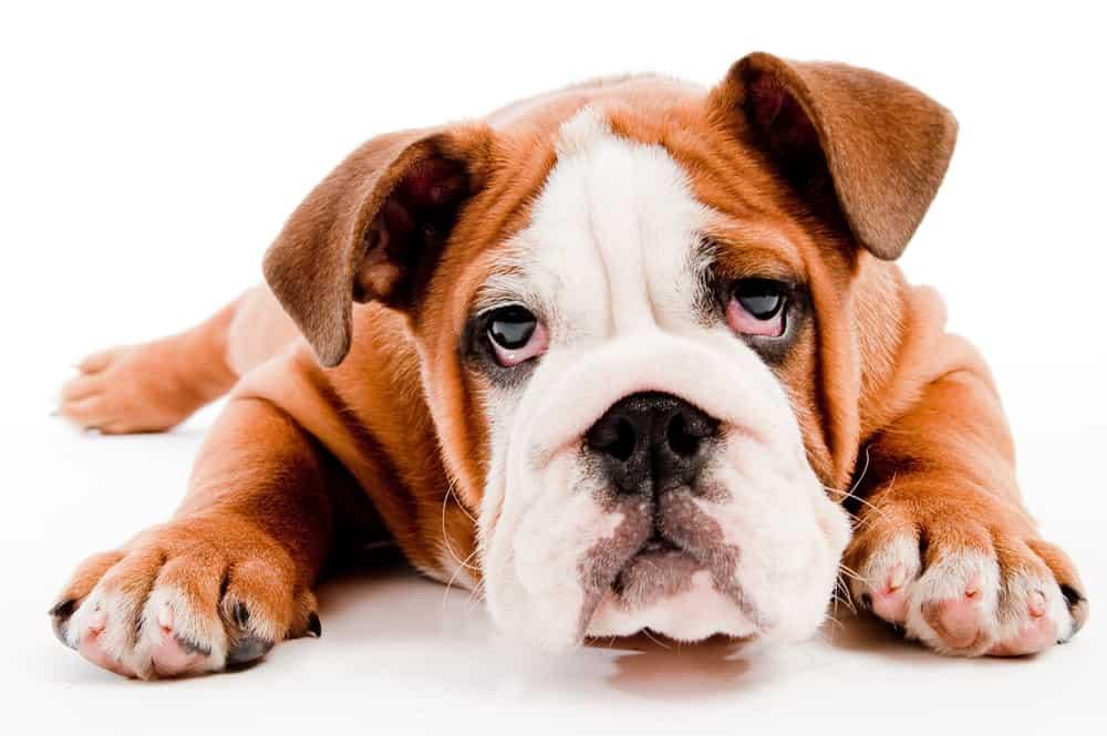 best dog food for acid reflux