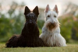 10 Best Dog Foods for Hair Loss in Dogs in 2020 27