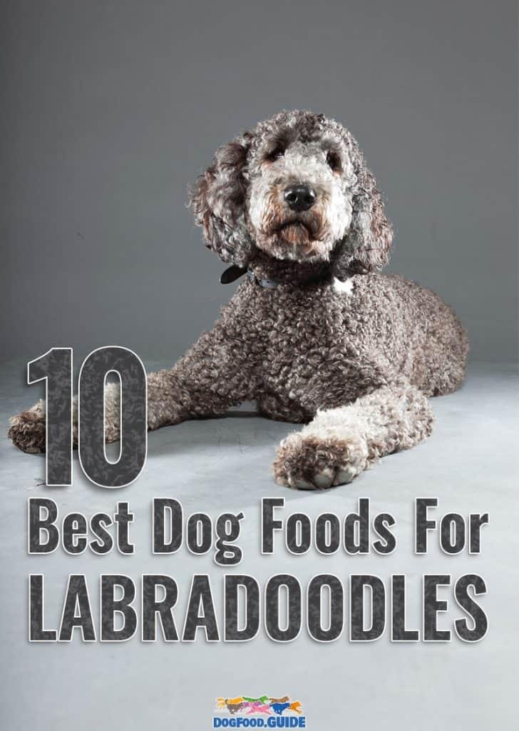 Best Dog Foods For Labradoodles