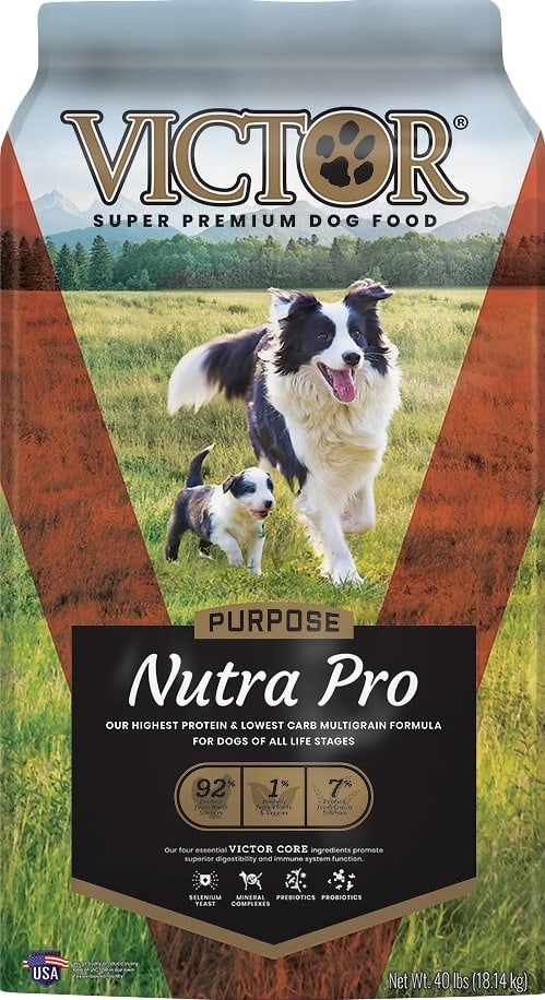 7 Best (Healthiest) Low Carb Dog Foods: Our 2021 Guide 1