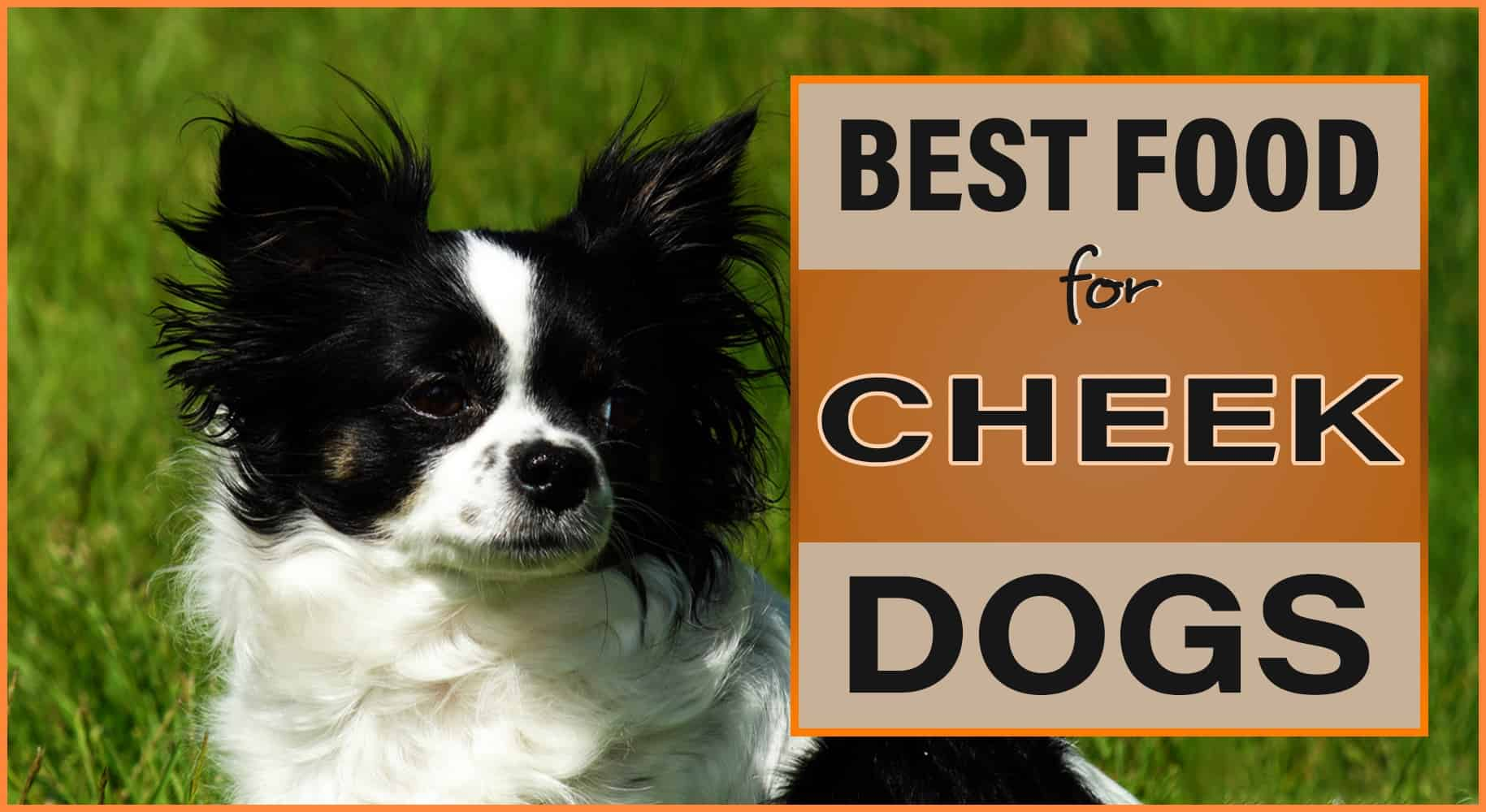 best dog food for cheek