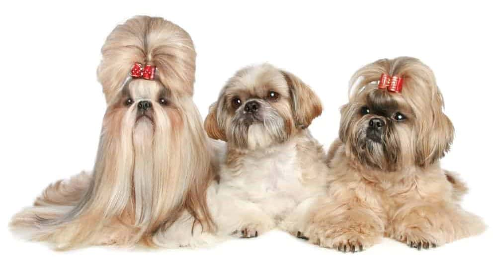 Best Dog Foods For Hair loss