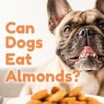 Can Dogs Eat Almonds? Are You Putting Your Dog's Life At Risk?