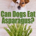 Can Dogs Eat Asparagus? Will This Give Your Pooch Gentle Thoughts?
