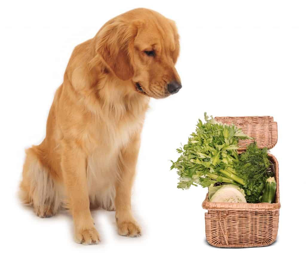 Can Dogs Eat Celery? Is It Also Healthy For Dogs? 1