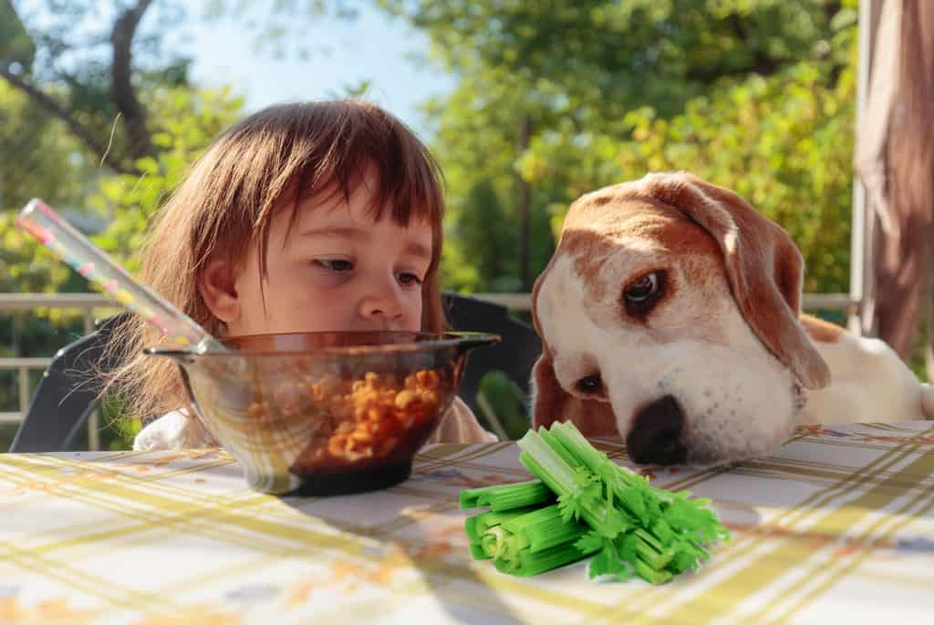 Can Dogs Eat Celery? Is It Also Healthy For Dogs? 2