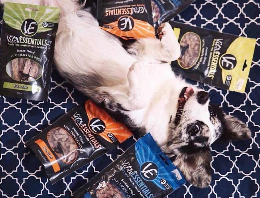 Vital Essentials Dog Food Review