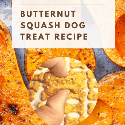 Can Dogs Eat Butternut Squash? What Are the Benefits of Butternut Squash for Dogs? 2
