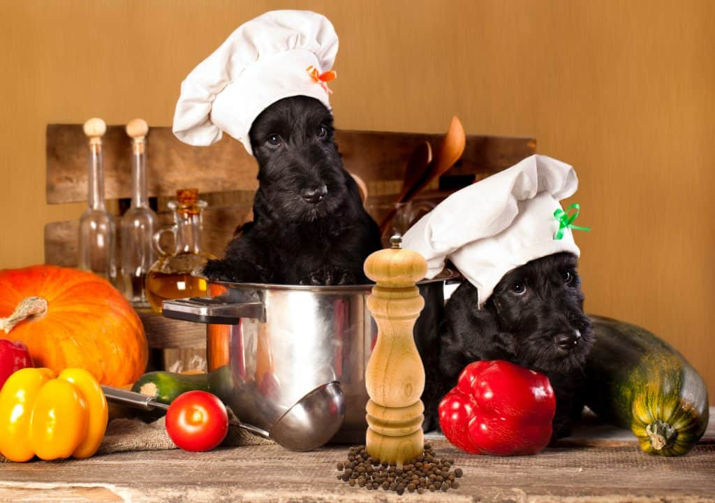 Can Dogs Eat Black Pepper?