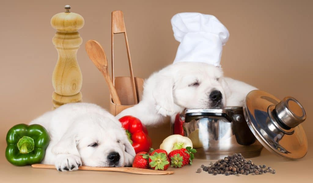 Can Dogs Eat Black Pepper? Is Black Pepper Safe for Dogs? 1