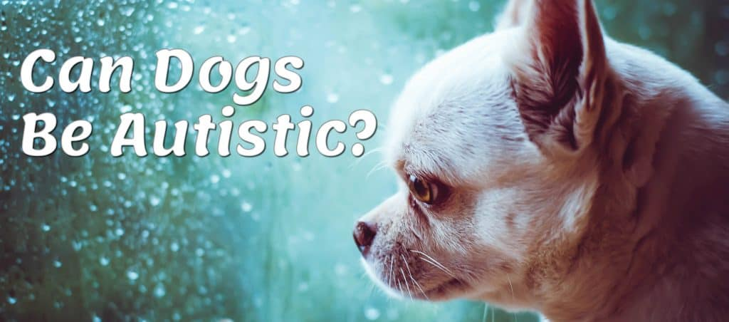 Can Dogs Be Autistic