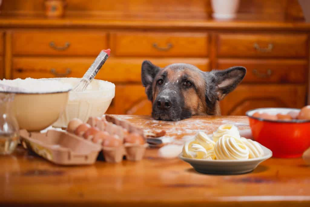 Can Dogs Eat Butter? Is Butter Bad for Dogs? 2