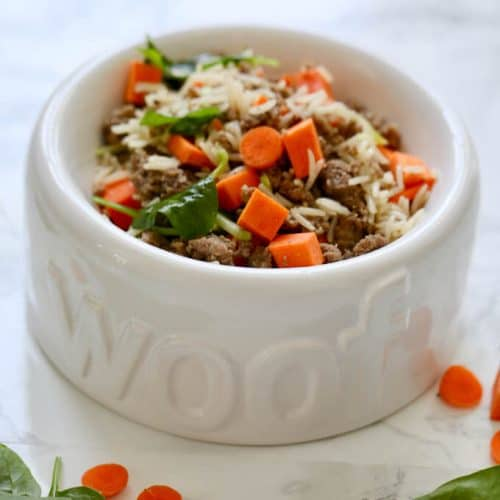Can Dogs Eat Rice? Is Rice Good Or Bad For Your Fido? 1