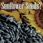 Can Dogs Eat Sunflower Seeds? What Are the Potential Side Effects of Sunflower Seeds in Dogs?