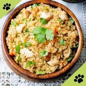 Can Dogs Eat Tofu? When Is It Okay to Feed Your Dog Tofu? 2