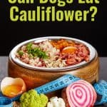 A Great Carb And Meat Alternative, Can Dogs Eat Cauliflower?