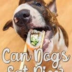 Can Dogs Eat Rice? Is Rice Good Or Bad For Your Fido?
