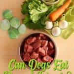 Can Dogs Eat Brussel Sprouts? What Are The Benefits of Brussels Sprouts for Your Dogs?