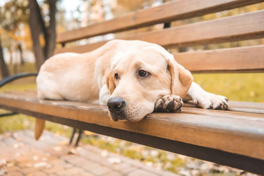 Can Dogs Be Autistic? What Are the Symptoms of Autism in Dogs? 1