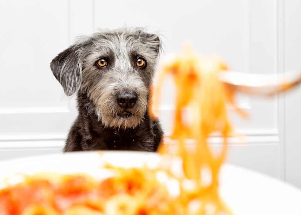 spaghetti and dog