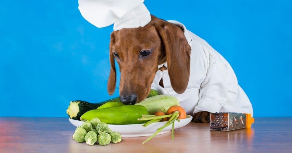 Can Dogs Eat Brussel Sprouts? What Are The Benefits of Brussels Sprouts for Your Dogs? 1