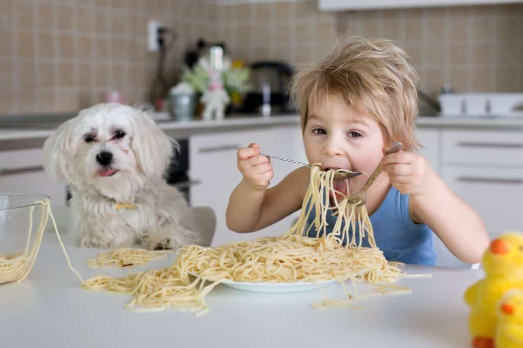 dog, boy spagehtti