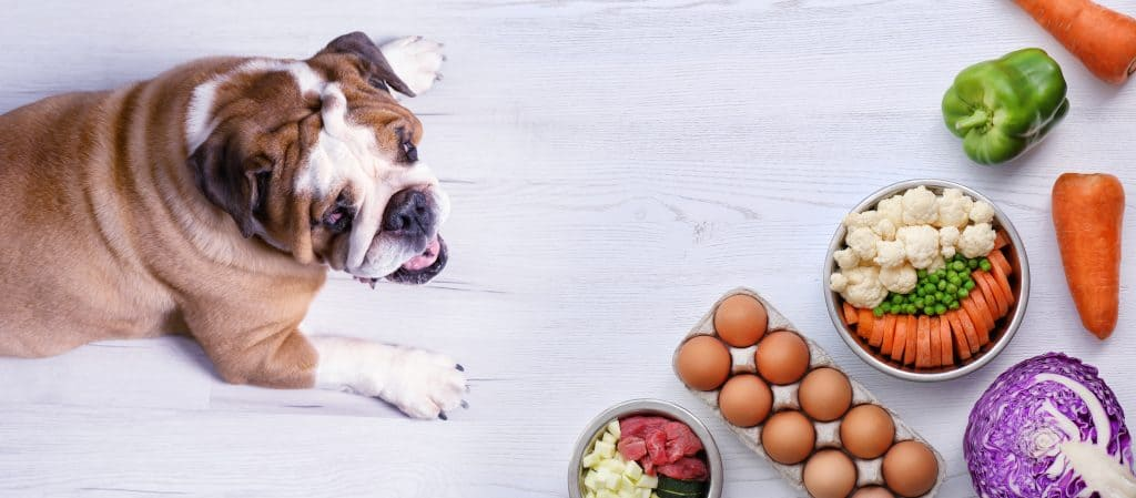 A Great Carb And Meat Alternative, Can Dogs Eat Cauliflower? 1