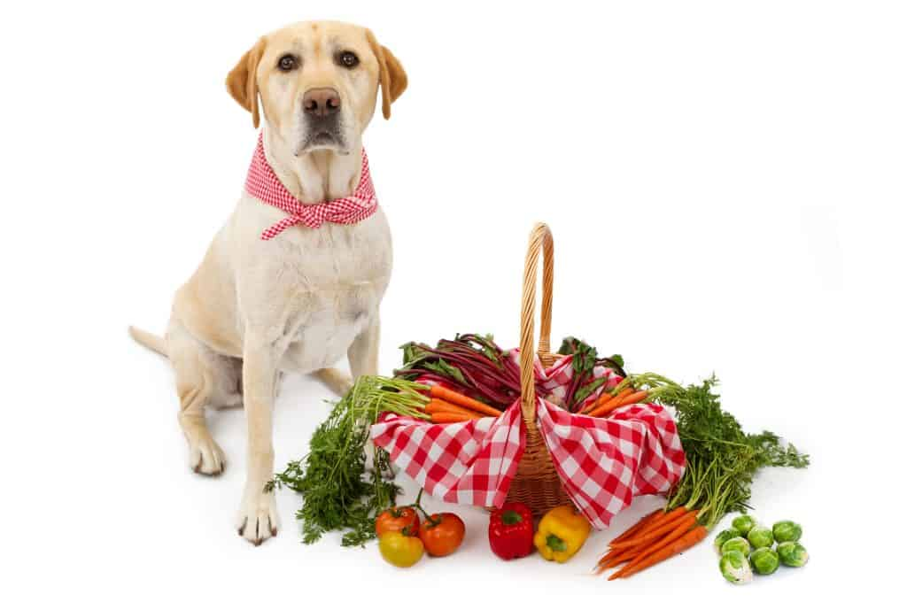 Can Dogs Eat Brussel Sprouts? What Are The Benefits of Brussels Sprouts for Your Dogs? 3