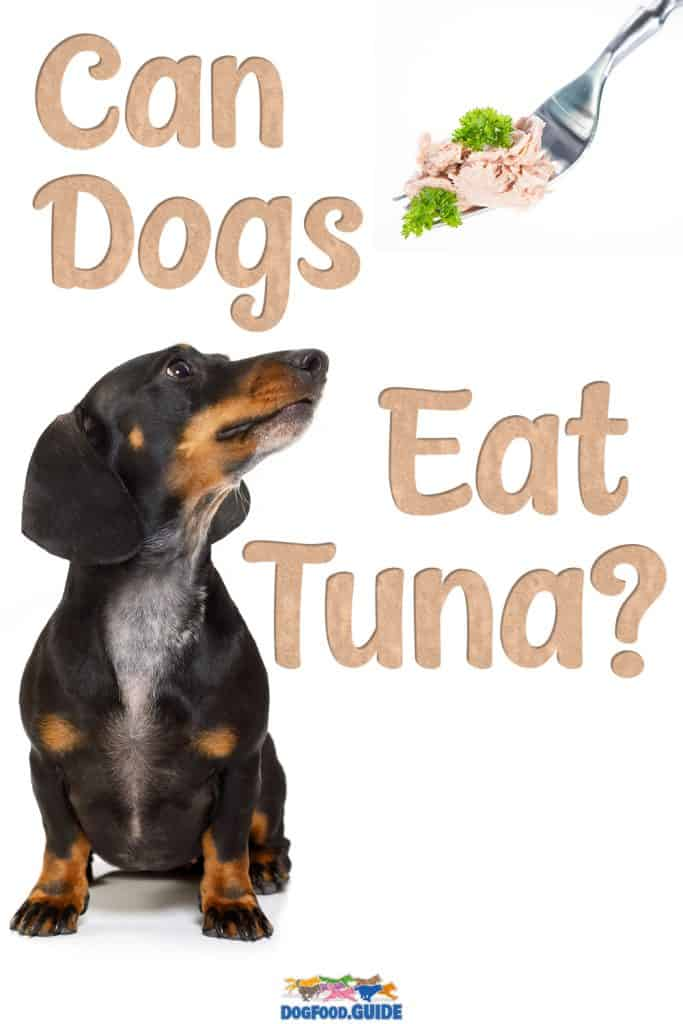Can Dogs Eat Tuna? One-Stop Guide to Feeding Your Dog Tuna 1