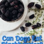 Can Dogs Eat Blackberries? Are Blackberries Toxic to Dogs?