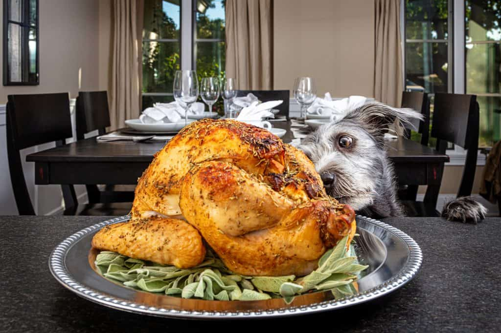 Can Dogs Eat Turkey? When is Turkey Bad for Dogs? 1