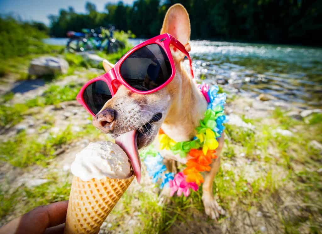 Can Dogs Eat Ice Cream? What Are Some Alternatives to Feeding Ice Cream in Dogs? 1