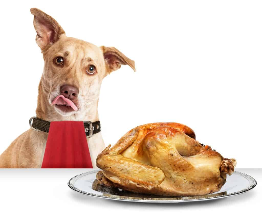 Can Dogs Eat Turkey? When is Turkey Bad for Dogs? 2